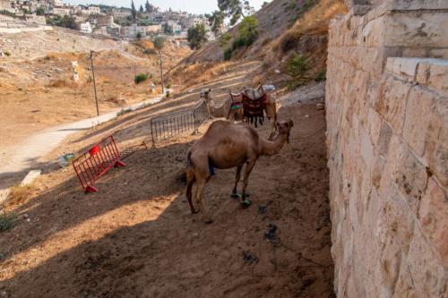 Jerusalem, Dolina Cedronu